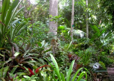Tropical Garden at Parkwood